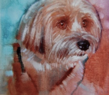 """Buster 12'x12"""" oil on canvas"""